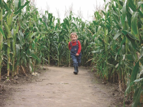 Lake Metroparks Farmpark corn maze (photo by Emily Stupica)