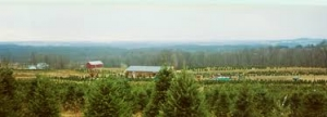 galehouse-tree-farm-image