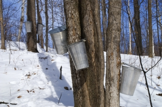 Maple events in Ohio