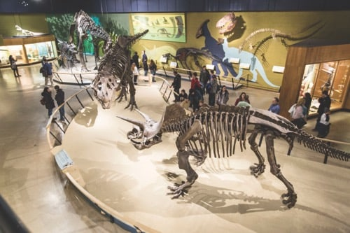 Things to do in Cleveland: Cleveland Museum of Natural History