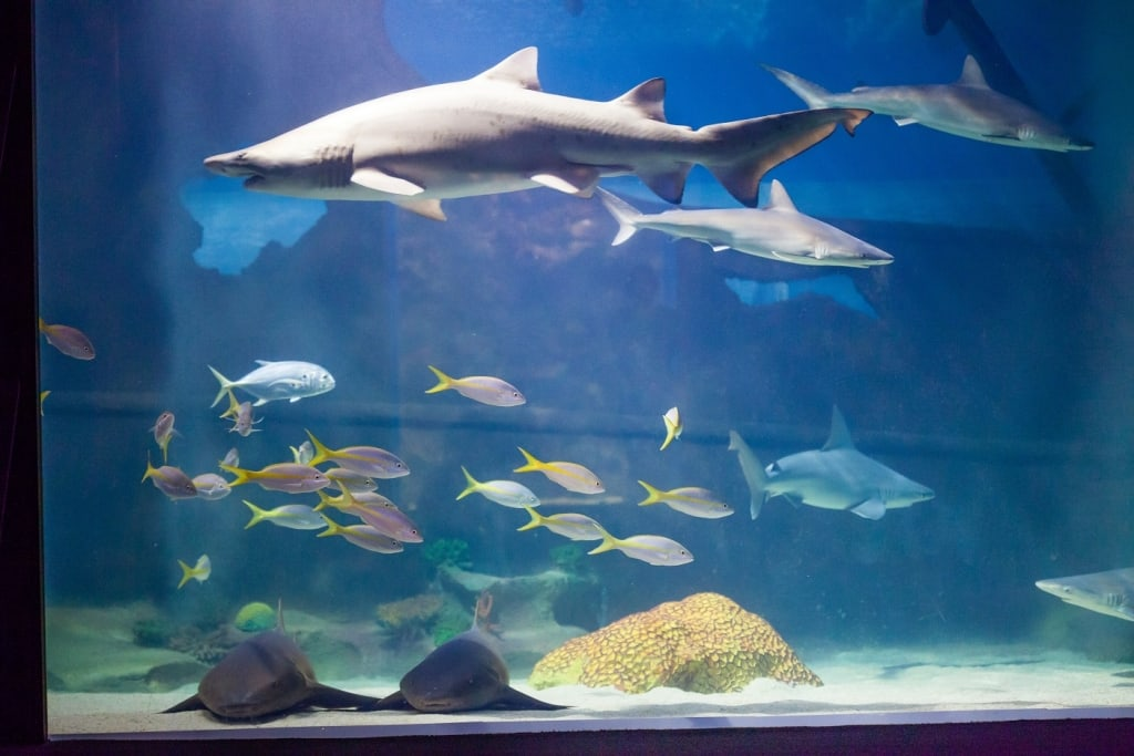 Greater Cleveland Aquarium's Fin Fest