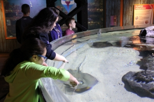 The Stingray Touch Pool at Greater Cleveland Aquarium